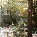 ...in tukaj desno v gozd, rahlo navzdol...