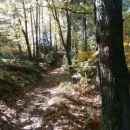 ...gozd se počasi umika...