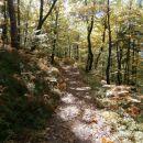 ...dinamična gozdna pot...
