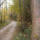 ...in v objemu gozda...