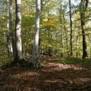 ...prijetna gozdna pot po grebenu...