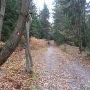 ...pot v izrazitem gozdnem delu...