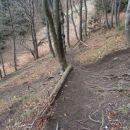 ...ja, tudi svet koreninske poti...