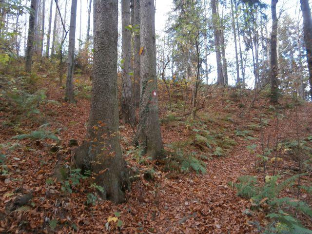 Mrzlica - Šmohor - Vipota , 31.10.2013 - foto