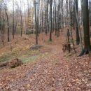 ...lepo je bilo v gozdu...