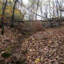 ...pred izhodom na plano iz gozda...