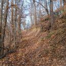 ...še gozdni del, lepa ožja potka v listju...