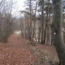...res lepa gozdna pot...