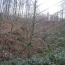 ...in levo od prijetne gozdne poti...