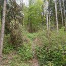 Gozdni del, ni bilo pravih prehodov