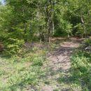...prijetna pot skozi gozd...