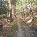 ...na gozdni cesti...