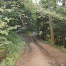 ...lep je gozdni svet...