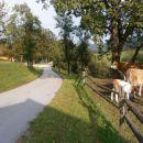 ...goveja živina, dve kravi in dva ,,ličeka,, če se ne motim...