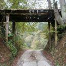 ...zanimiv lesen, nekakšen most nad cesto...