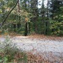...še preko gozdne ceste...