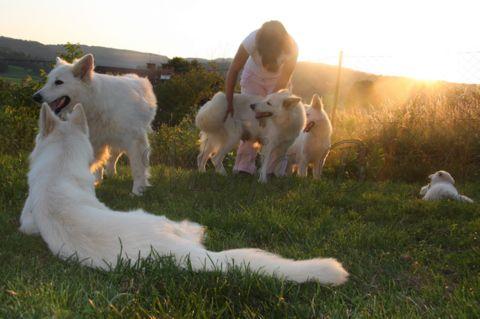 Whiterose-mladički,27.6.2010 - foto