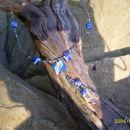 Modro-bela dolga ogrlica