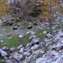 travna dolina