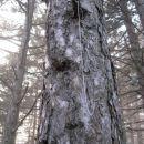 evo, hanging tree