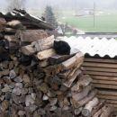 drva grejejo tudi brez ognja