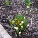 ...prihaja pomlad
