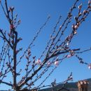pomlad ...