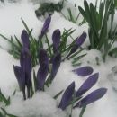 spet sneži, grem po dinga...