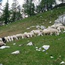 ovčja kosilnica
