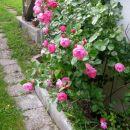 vrtnice ob hiši