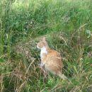 muc, srečen v visoki travi