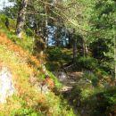 po grebenu borovcev