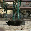še mačkon uživa na sončku
