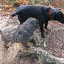 srečanje z vaško psičko