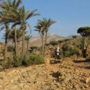 rajska divjina endemičnih dreves ...
