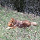 dingo važen - kao, sej ni blo nč ...