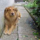 najbolj ubogljiv pes pod soncem čaka name ...