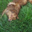 kao - se je obrisal v travo ...
