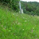 čudovit travnik z mnogovrstnimi cvetlicami