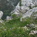 pogled v dolino krme