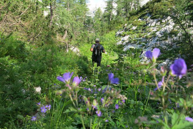 Proti mišeljski dolini