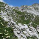 ... še vedno polno alpske velese