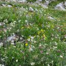 alpski travnik