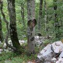 drevo s srcem
