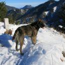 tud dalmatinka uživa v gorah