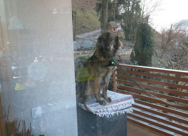 Obisk na hribcu  31.12.2015 - foto