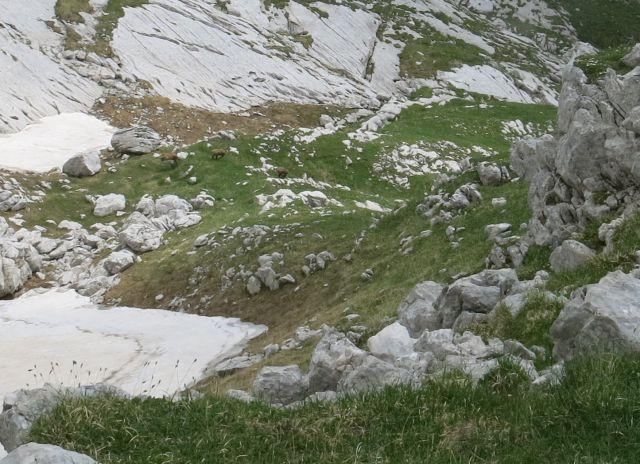 Gamsov skret, Sleme, bivak  29.06.2016 - foto