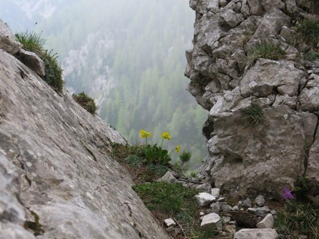 Planina košutna   05.06.2019 - foto