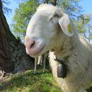 slemenova špica + ovce  15.09.2020