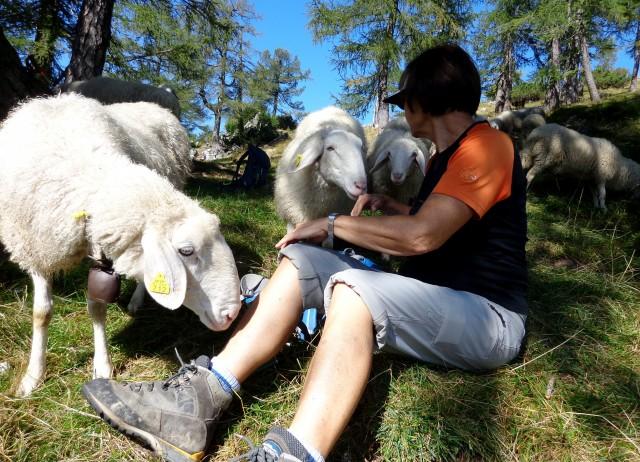 Slemenova špica + ovce  15.09.2020 - foto